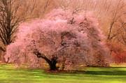 Four Seasons Magical Spring Print by Zeana Romanovna