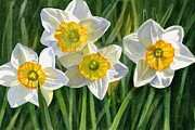 Daffodil Painting Framed Prints - Four Small Daffodils Framed Print by Sharon Freeman