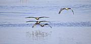 Waterway Birds Prints - Foursome Print by Deborah Benoit