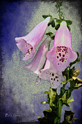 Fox Digital Art Framed Prints - Fox Glove Blue Grunge Framed Print by Bill Cannon