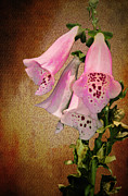 Fox Digital Art Prints - Fox Glove Grunge Print by Bill Cannon