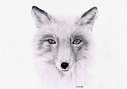 Lucy D Drawings Metal Prints - Fox Metal Print by Lucy D