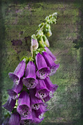 Foxglove Flowers Digital Art Prints - Foxglove Digitalis - Love  and Christ Print by Kathy Clark