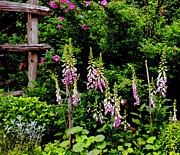 Foxglove Flowers Paintings - Foxglove Garden by Renate Nadi Wesley