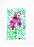 Foxglove Pastels Framed Prints - Foxglove Framed Print by Sean Mann