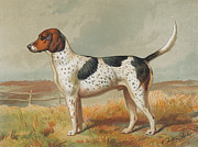 Foxhound Prints - Foxhound Print by Henry Guttmann