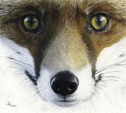 Fox Drawings Acrylic Prints - Foxy Lady Acrylic Print by Brent Ander