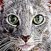 Feline Digital Art - Fractal Feline by David G Paul