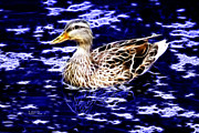 Rateitart Posters - Fractal - Mallard In Pond- 9164 Poster by James Ahn