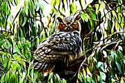 James Ahn Prints - Fractal-S -Great Horned Owl - 4336 Print by James Ahn