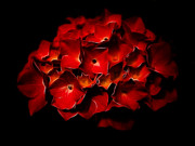 Fractalius Red Hydrangea Print by Jay Lethbridge