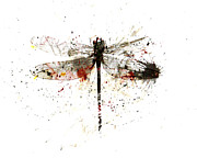 Larysa Luciw Framed Prints - Fractured Dragonfly Framed Print by Larysa Luciw
