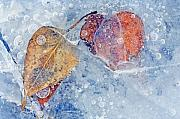 Bubbles Photos - Fractured Seasons by Mike  Dawson