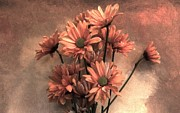 Taupe Photos - Fragile Peach Daisies by Marsha Heiken