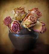 Rose Petals Digital Art Prints - Fragile Rose Print by Jessica Jenney