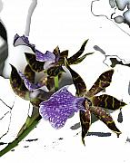 Purple Flowers Digital Art - Fragile by Vijay Sharon Govender