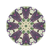 Mandala Photos - Fragrance of Color by Ken Fields