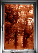 Trees Acrylic Prints - Frame by Roberto Alamino