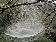 Megan Brandl - Framed Dew Covered Web