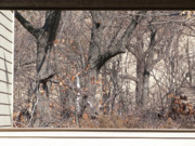 Indiana Autumn Posters - Framing Tangled Dunescape Poster by Ann Horn