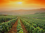 Winemaking Photos - France,champagne Vineyards Near Epernay,sunset by Images Etc Ltd