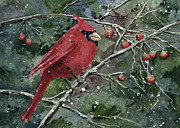 Cardinal Paintings - Francis Cardinal by Sam Sidders