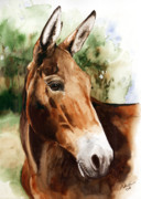 Equine Art Paintings - Francis by Nadi Spencer