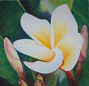Yellow Leaves Pastels Prints - Frangipani after rain Print by Loueen Morrison