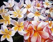 Frangipanis Prints - Frangipani Collage Print by Jan Lawnikanis