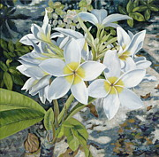 Florida Flowers Paintings - Frangipani by Danielle  Perry