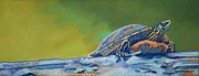Stripes Pastels Metal Prints - Franks Turtle Metal Print by Tracy L Teeter