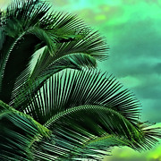 Palms Photos - Frawns by Joetta West