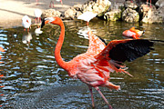 Flamingo Gardens Photography - Free As A Bird by Carmen Del Valle