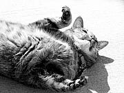 Cats Photo Metal Prints - Free At Last Metal Print by Sally Engdahl