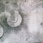 Etching Reliefs - Free Form Two by Sabrina McGowens
