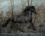 Friesian Horse Framed Prints - Free II Framed Print by Jean Hildebrant
