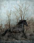 Friesian Art Framed Prints - Free Framed Print by Jean Hildebrant