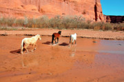 Free Photos - Free Range Canyon de Chelly by Thomas R Fletcher