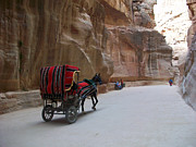 Petra Originals - Free Ride by Munir Alawi