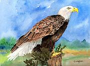 Birds Of Prey Paintings - Freedom by Arline Wagner