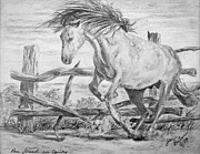 Wild Horses Drawings Originals - Freedom by Jim Barber Hove