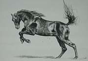 Horse Drawings Prints - Freedom Print by Michelle Hand