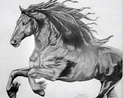 Wild Horse Drawings - Freedom by Sandi Dawn McWilliams
