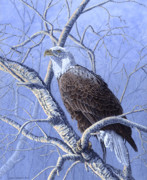 Craig Carlson Prints - Freedoms Spirit - Bald Eagle Print by Craig Carlson