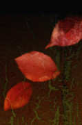 Red Leaves Mixed Media Posters - Freefall Poster by Bonnie Bruno
