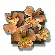 Featured Digital Art - Freesia by Stan Bowman