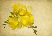 Yellow Flowers Framed Prints - Freezia Bouquet 2 Framed Print by Rebecca Cozart