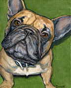French Bulldog Paintings - French bulldog Looking Up on Green by Dottie Dracos