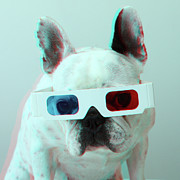 Humor Prints - French Bulldog With 3d Glasses Print by Retales Botijero