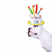 Text Photo Prints - French Bulldog With Birthday Cake Print by Maika 777